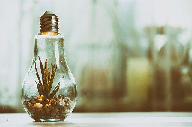 Sklenené žiarovka na drevenom v stole, v ktorej rastie zelená rastlina.jpg